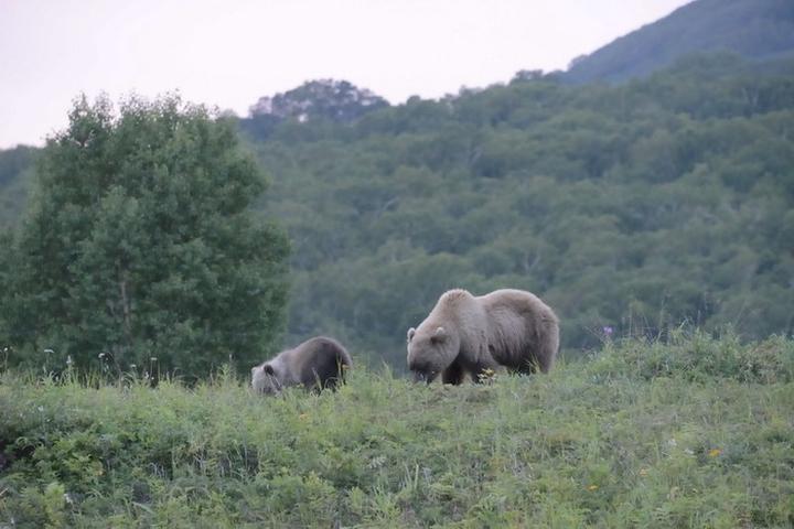 Путешествие на квадроциклах Камчатка медведи