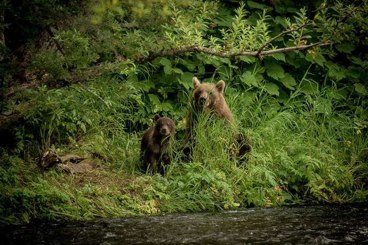 Медвежий бастион на Камчатке